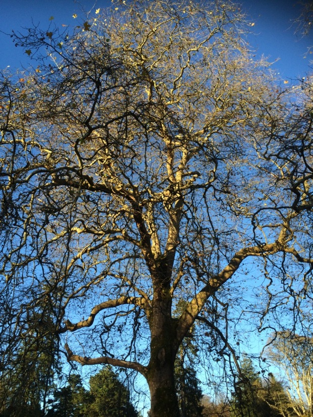 Tree | MyCraftyMusings